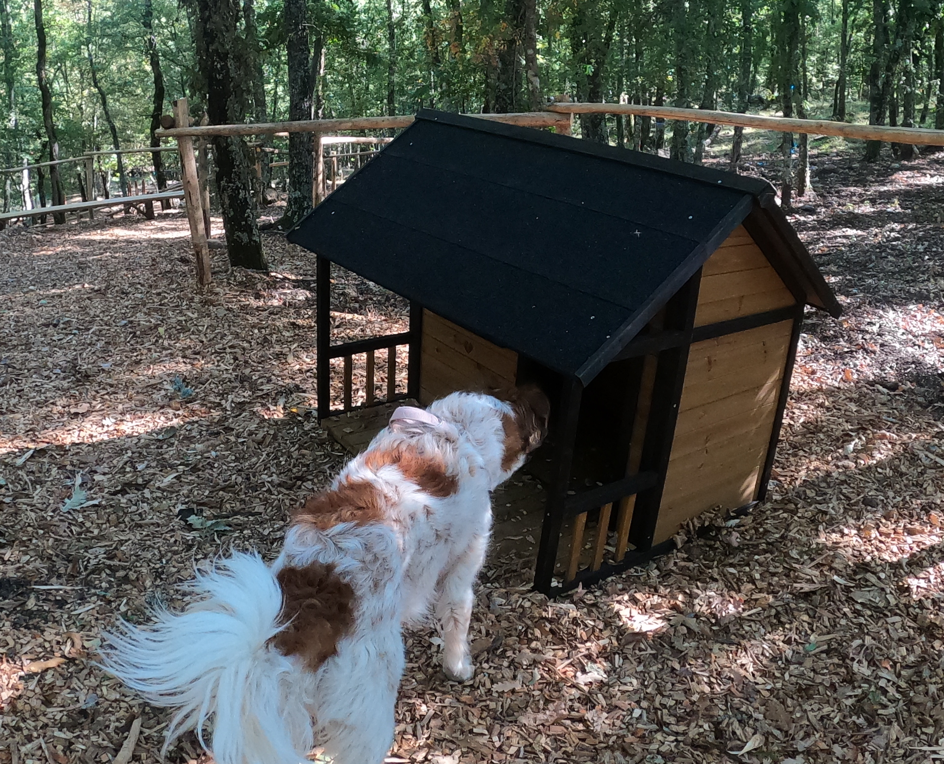What's new at Vallicella Glamping Resort